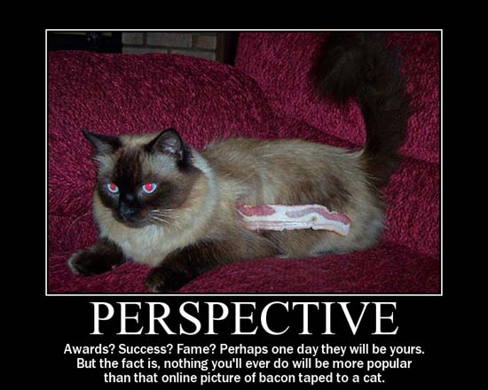 Perspective / Awards? Success? Fame? Perhaps one day they will be yours. But the fact is, nothing you'll ever do will be more popular that that online picture of bacon taped to a cat.