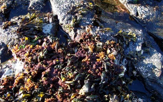 South Point Higgins beach seaweed