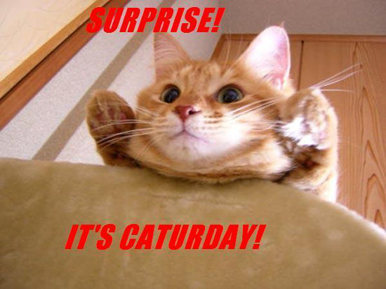 Surprise, it's Caturday!