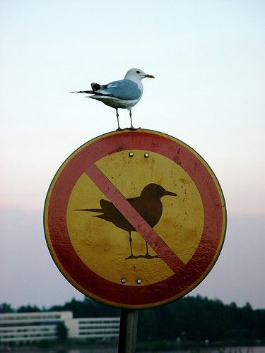 No birds allowed sign, with a bird sitting on it.