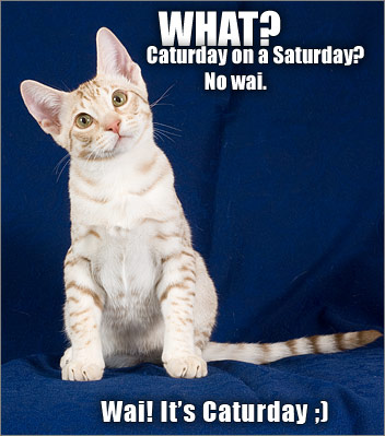 What? Caturday on a Saturday? No wai. / Wai! It's Caturday ;]