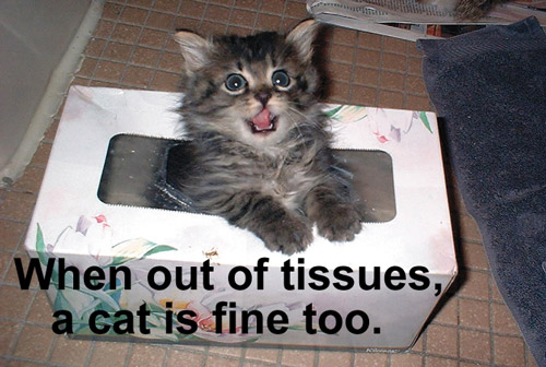 When out of tissues, a cat is fine too