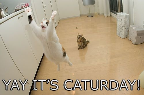 Yay it's Caturday!