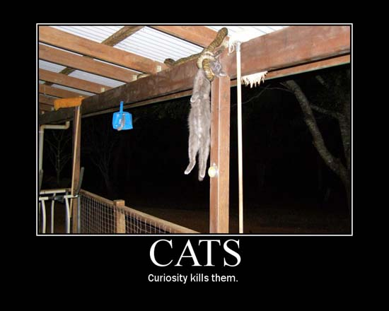 Cats / Curiosity kills them.