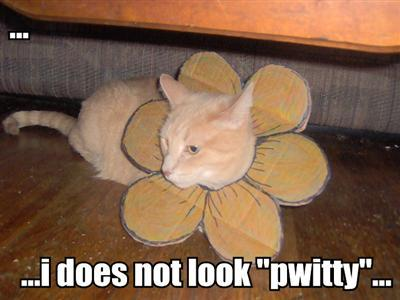...i does not look 'pwitty'...