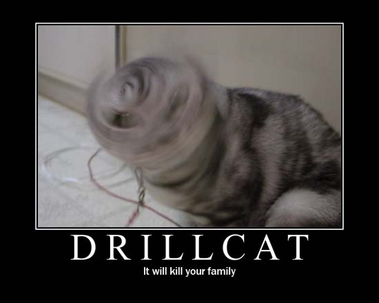 Drillcat / It will kill your family.