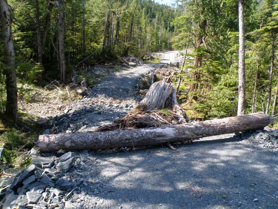 Logging road closed and dug across.
