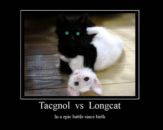 Tacgnol vs Longcat / In an epic battle since birth