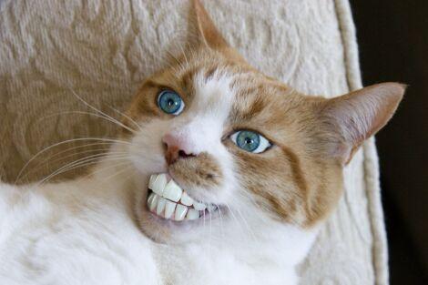Teeth?