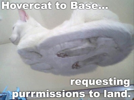 Hovercat to Base... Requesting purrmissions to land.