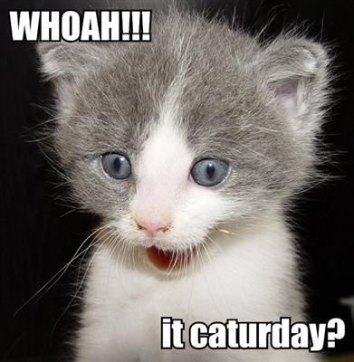 Whoah!!! it caturday?