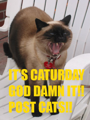 It's Caturday God damnit!! Post some cats!!