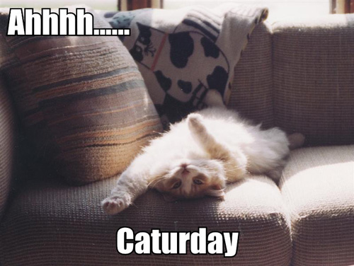 Ahhhh...... Caturday