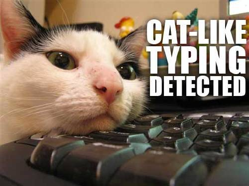 Cat-like typing detected.
