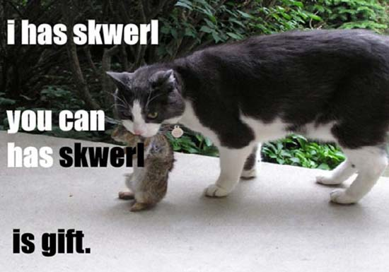 I has skwerl you can has skwerl is gift.