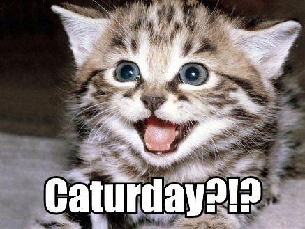 Caturday!?