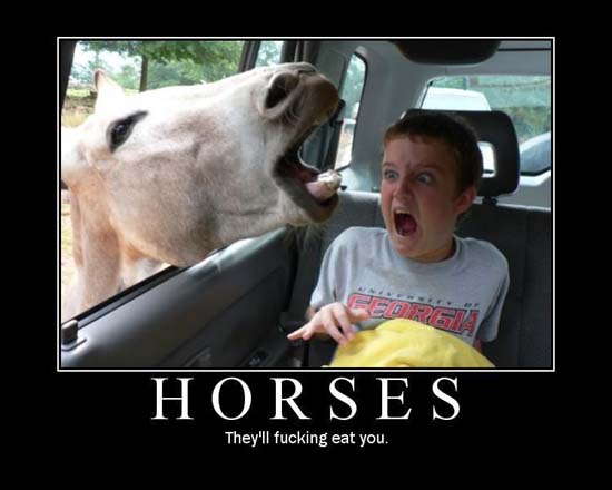 Horses / They'll fucking eat you.