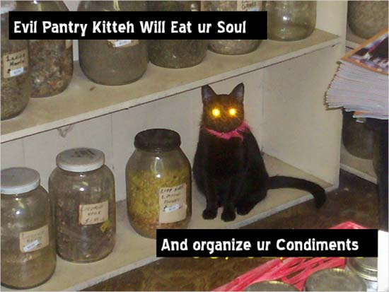 Evil pantry cat will eat ur soul / and organize ur condiments