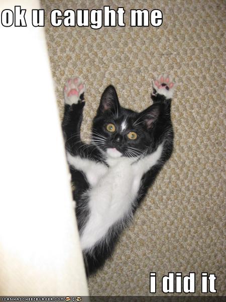 090124 caught me master marf caturday serious caught catnip,Caught Me Meme