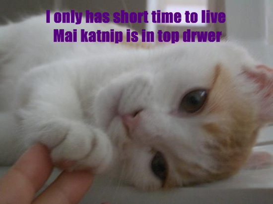 I only has short time to live. Mai katnip is in top drwer