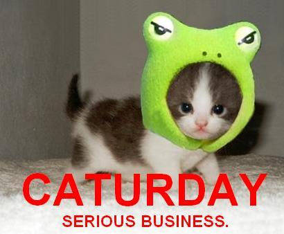 Caturday / Serious business.
