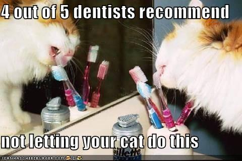 4 out of 5 dentists recommend not letting your cat do this.