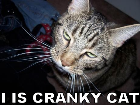 I is cranky cat