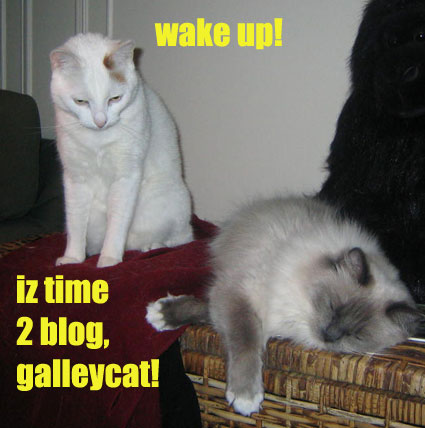 Wake up! Iz time 2 blog, galleycat!
