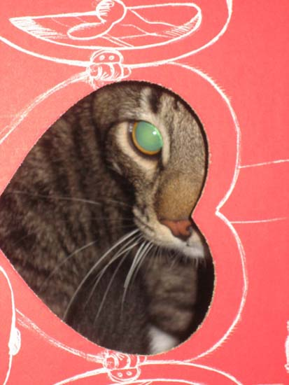 Cat inside a Valentine's Day heart box.