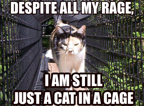 Despite all my rage I am still just a cat in a cage.