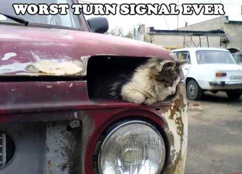 Worst turn signal ever