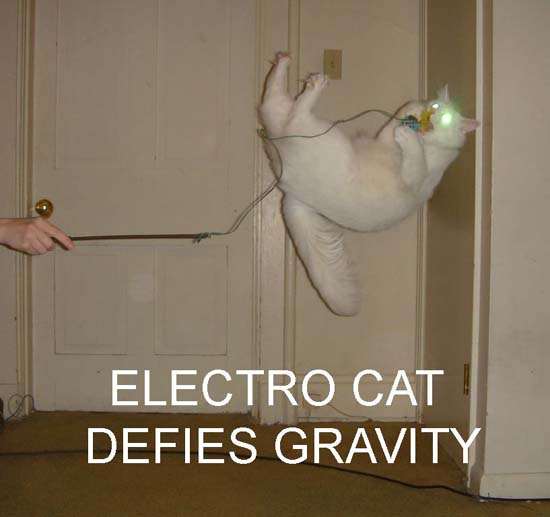 Electro Cat defies gravity