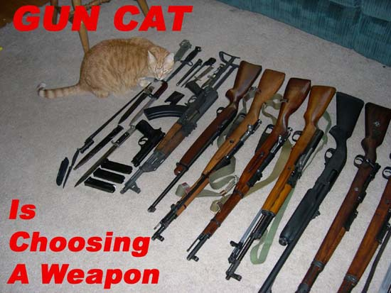 Gun Cat is choosing a weapon