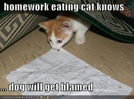 Homework eating cat knows ...dog will get blamed