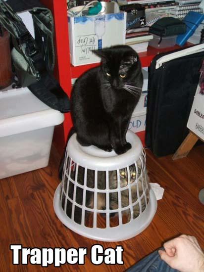 Trapper Cat