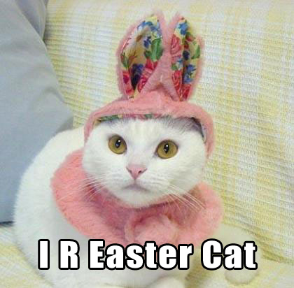I R Easter Cat