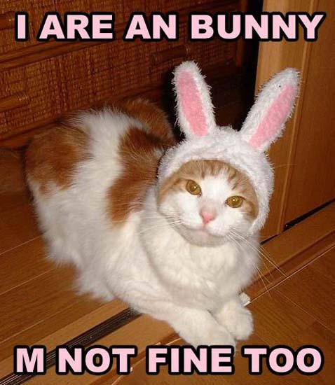 I are an bunny / M not fine too