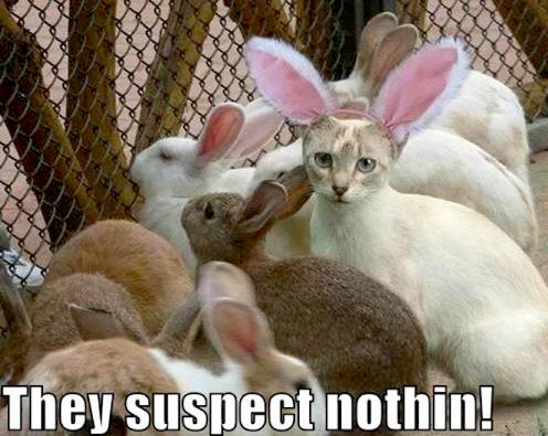 They suspect nothin!