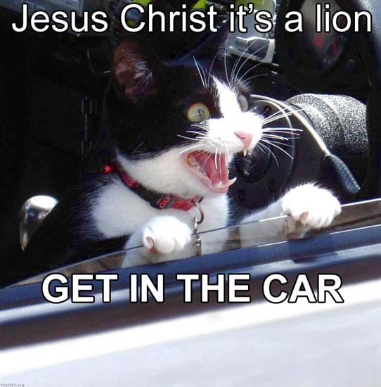 Jesus Christ it's a lion GET IN THE CAR