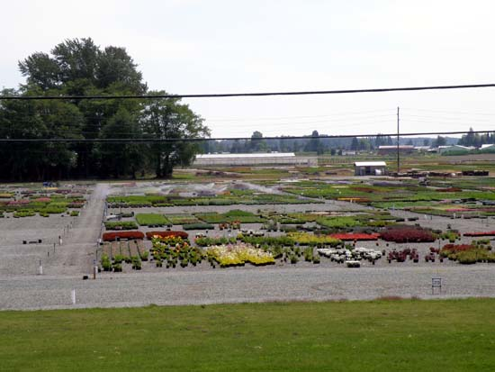Skagit Gardens nursery.