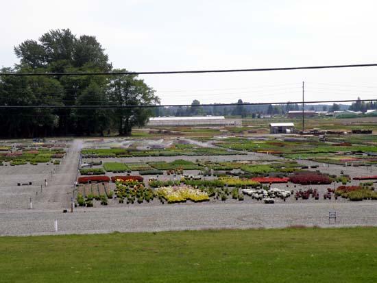 Skagit Gardens nursery.