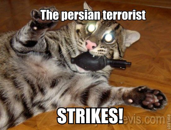 The persian terrorist STRIKES!