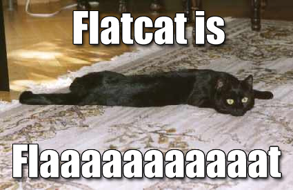 Flatcat is Flaaaaaaaaaaat