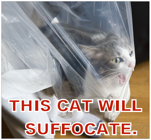 This cat will suffocate.