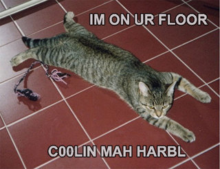 Im on ur floor coolin mah harbl