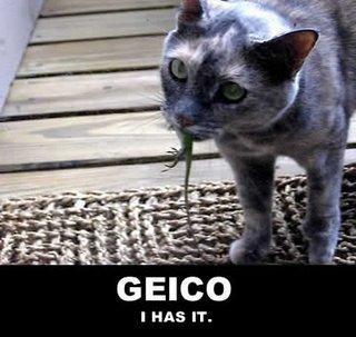 Geico / I has it.