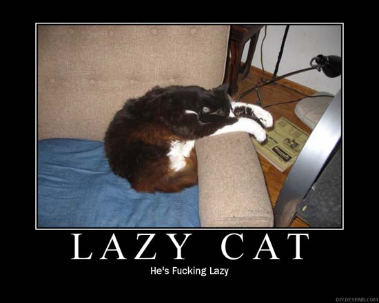 Lazy Cat / He's fucking lazy