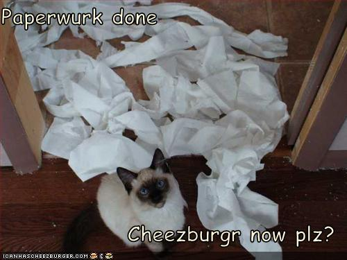 Paperwurk done Cheezburgr now plz?