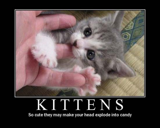 Kittens / So cute they make your head explode into candy