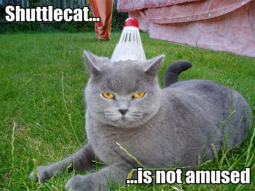 Shuttlecat... Is not amused.